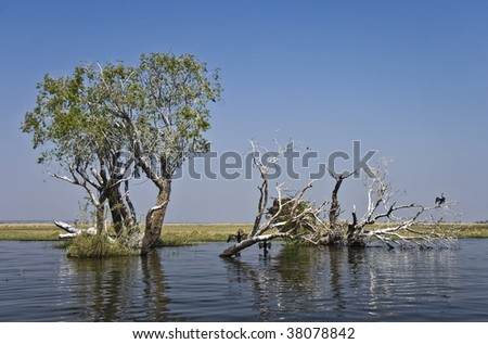 Chobe River view with cormorant birds and trees