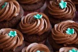 chocolate cupcake, set of cupcakes