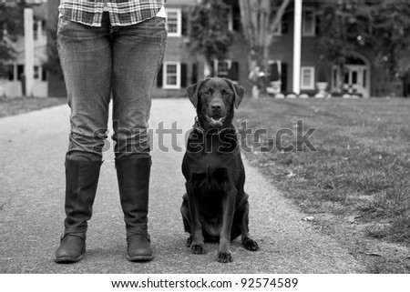 Chocolate Labrador with the legs of a woman wearing jeans and brown boots