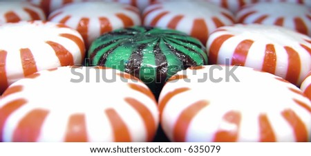 Chocolate mint surrounded by peppermints