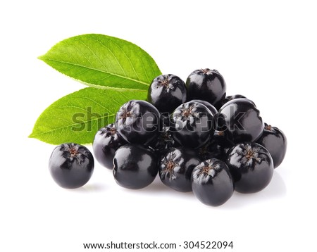 Chokeberry with leaves
