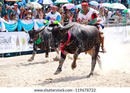 CHONBURI, THAILAND - OCT 29 : Unidentified peoples raced buffalos in 141th Buffalo Racing Festival on October 29, 2012. Chonburi, Thailand. Buffalo Racing Festival is a tradition of Chonburi.