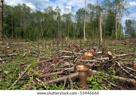 chopping wood