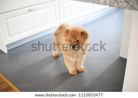 Free Photos Fluffy Chow Chow Dog Isolated On White Background