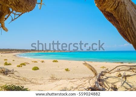 Chrisi island beach view from under big juniper tree, Crete, Greece. One of the most beautiful uninhabited island of Greece.
