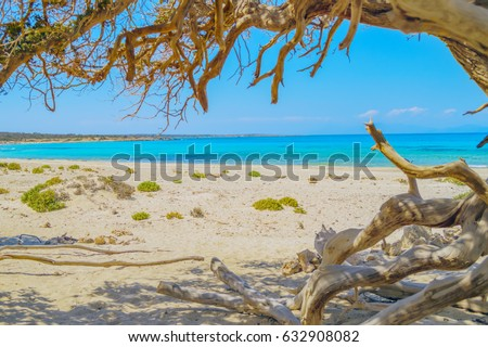 Chrissi (Chrysi) island background with juniper tree branches in the foreground, Crete, Greece. One of the most beautiful uninhabited island of Greece.