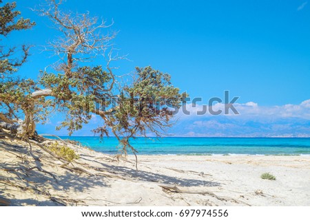 Chrissi island beach background with juniper tree in the foreground, Crete, Greece. One of the most beautiful uninhabited island of Greece.