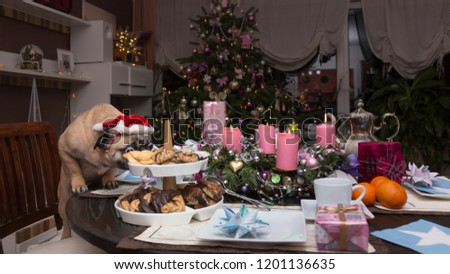 Stock Photo Christmas, a laid table - a pug sniffs at the cookies
