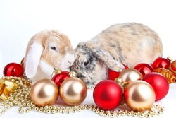 Christmas animals. Cut lop eared rabbit pet friends on isolated white studio background. Rabbits with red and gold christmas ornaments. Christmas mini french lop pets celebrate holiday together.
