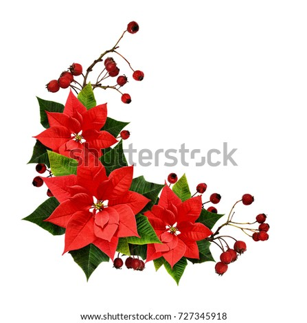 Christmas arrangement with berries and poinsettia flowers isolated on white background. Flat lay. Top view.