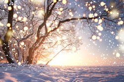 Christmas background. Magic glowing snowflakes in winter nature landscape. Beautiful winter scene with bokeh. Winter fairytale. Illuminated lights shine tree