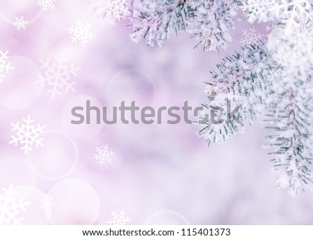 Christmas Background with Fir-tree and Real Snow