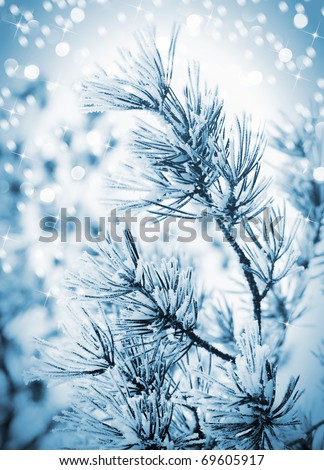 Christmas background with frosty pine tree with stars.