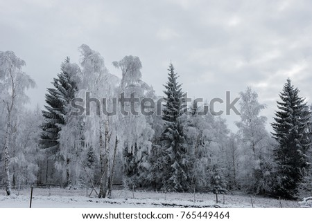 Christmas background with snowy trees winter holidays greetings christmas background with snowy trees winter holidays greetings m4hsunfo