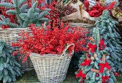 Christmas berry holly or ilex twigs and blue spruce twigs in wicker baskets, mini christmas trees created from spruce branches on the greek garden shop counter. Decorations for the New Year holidays.