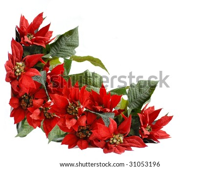 Christmas border background artificial poinsettia blossoms with room for text, great for card design