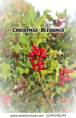 Christmas Card - Christmas Blessings - Holly & Berries  #1249248199