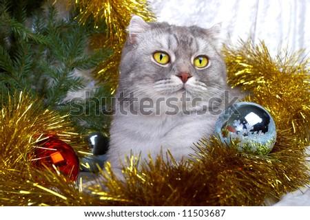 Christmas cat among a fur-tree, christmas balls and a tinsel