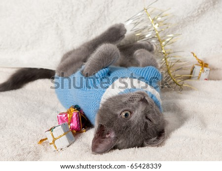 Christmas cat among a presents - stock photo