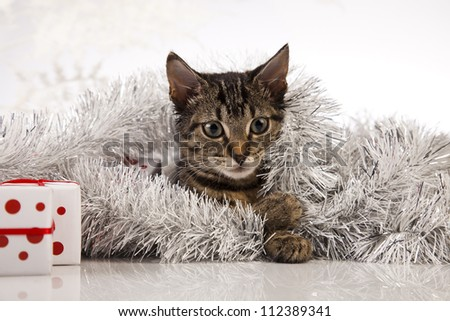 Christmas cat and gift