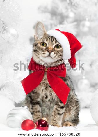 Christmas cat at red santa\'s hat  near christmas tree