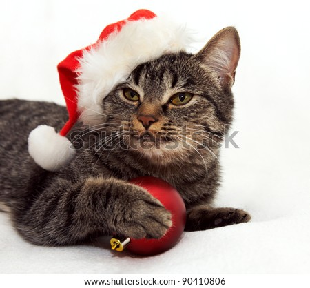 Christmas cat in red Santa Claus cap touching a red ball