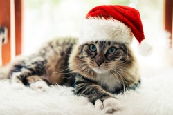 christmas cat in red Santa Claus hat