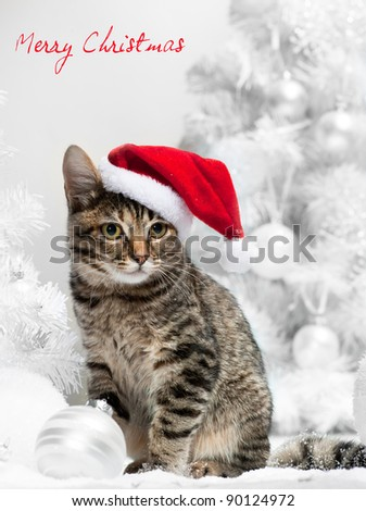 Christmas cat in red santa\'s hat  near christmas tree