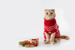 Christmas cat wearing a red knitted sweater sitting on white background with Christmas presents. Copy space for text. Christmas sale banner, greeting card, poster, winter holiday shopping