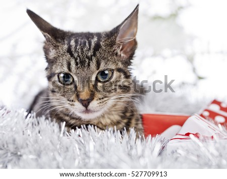 christmas cat with a christmas tree and present