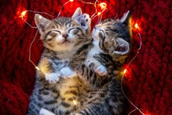 Christmas cats. Two cute little striped kittens sleeping on red background. Kitty with Christmas garland lights .