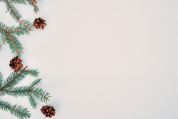 Christmas composition. Green spruce branches, and dry open fir cones. Christmas, new year, winter concept. Flat lay, top view, copy space