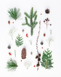 Christmas composition. Pattern made of different winter plants on white background. Christmas, winter, new year concept. Flat lay, top view