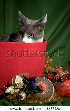 Christmas decoration Cat in a box of Christmas ornaments in green background