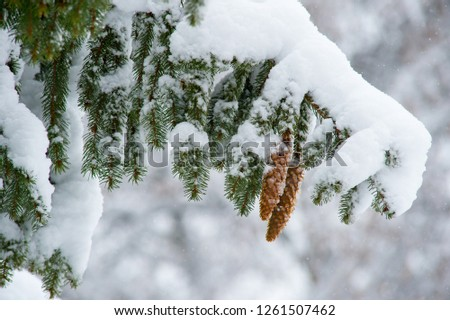 Christmas decoration fir cones and fir branches #1261507462