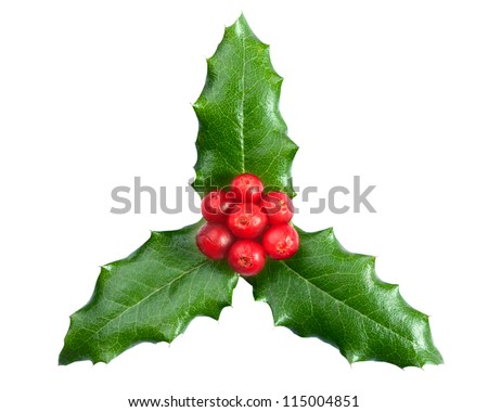 Christmas decoration. Holly with berries on the white background