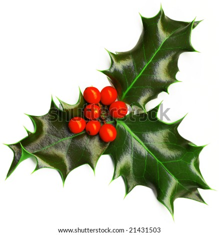 Christmas decoration isolated holly with berries on the white