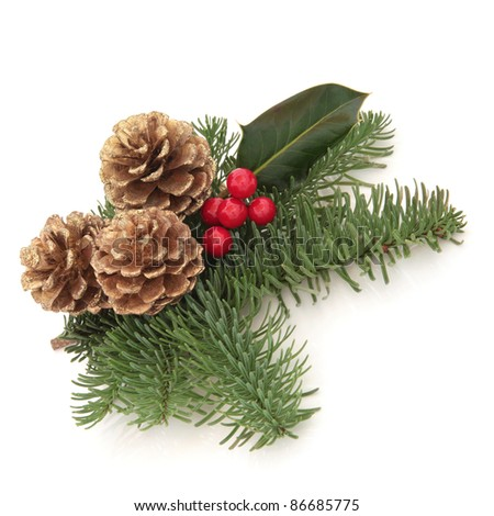 Christmas decoration of holly berry and blue spruce fir leaf sprigs with golden pine cones isolated over white background.