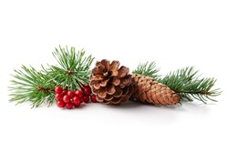 Christmas decoration of holly berry and pine cone on white background.