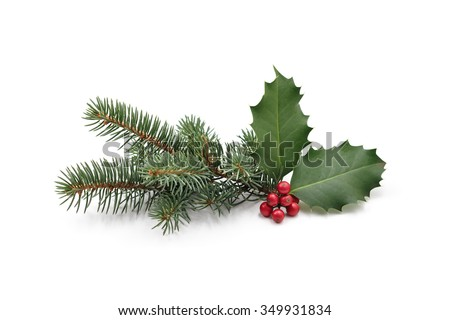 Christmas decoration of holly berry and pine tree #349931834