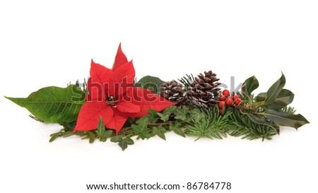 Christmas decoration of poinsettia flower, holly, ivy, pine cones and spruce fir leaf sprig isolated over white background.