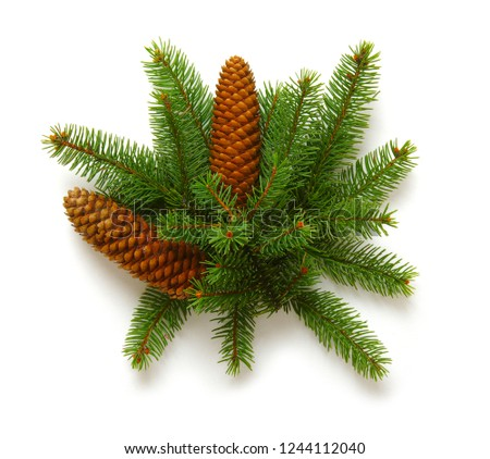 Christmas decoration with fir cones and fir branches isolated on a white background  #1244112040
