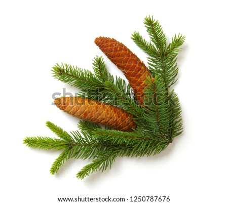 Christmas decoration with fir cones and fir branches isolated on a white background  #1250787676