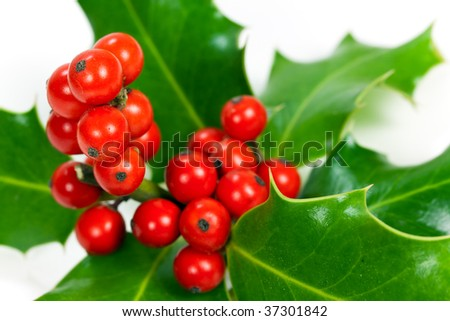 christmas decoration with holly leaves and berries,isolated on white