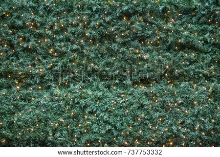Christmas decoration with many small led lights on a bckground of green pine tree branches #737753332