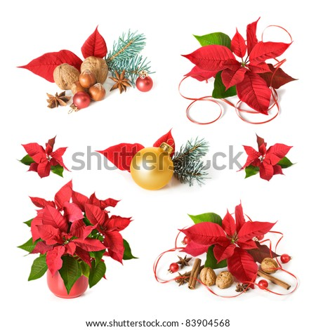 Christmas decoration with poinsettia, collection on white background