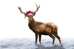 Christmas deer on white Background