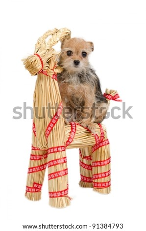 Christmas Dog is riding a straw Santa's raindeer