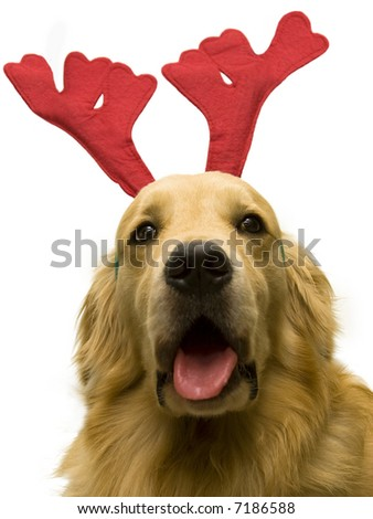 christmas dog singing on white background