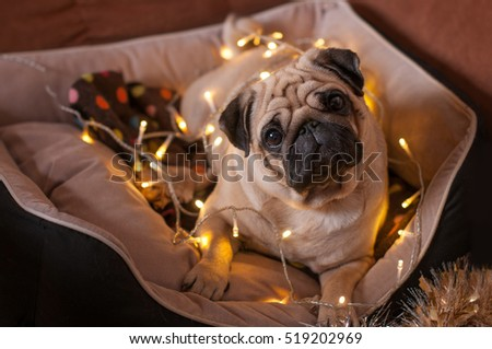 christmas dog with garland in bed on christmas holidays